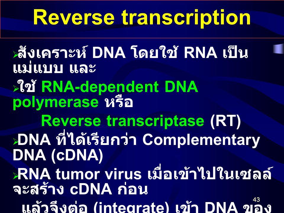 43 Reverse transcription  สังเคราะห์ DNA โดยใช้ RNA เป็น แม่แบบ และ  ใช้ RNA-dependent DNA polymerase หรือ Reverse transcriptase (RT)  DNA ที่ได้เร