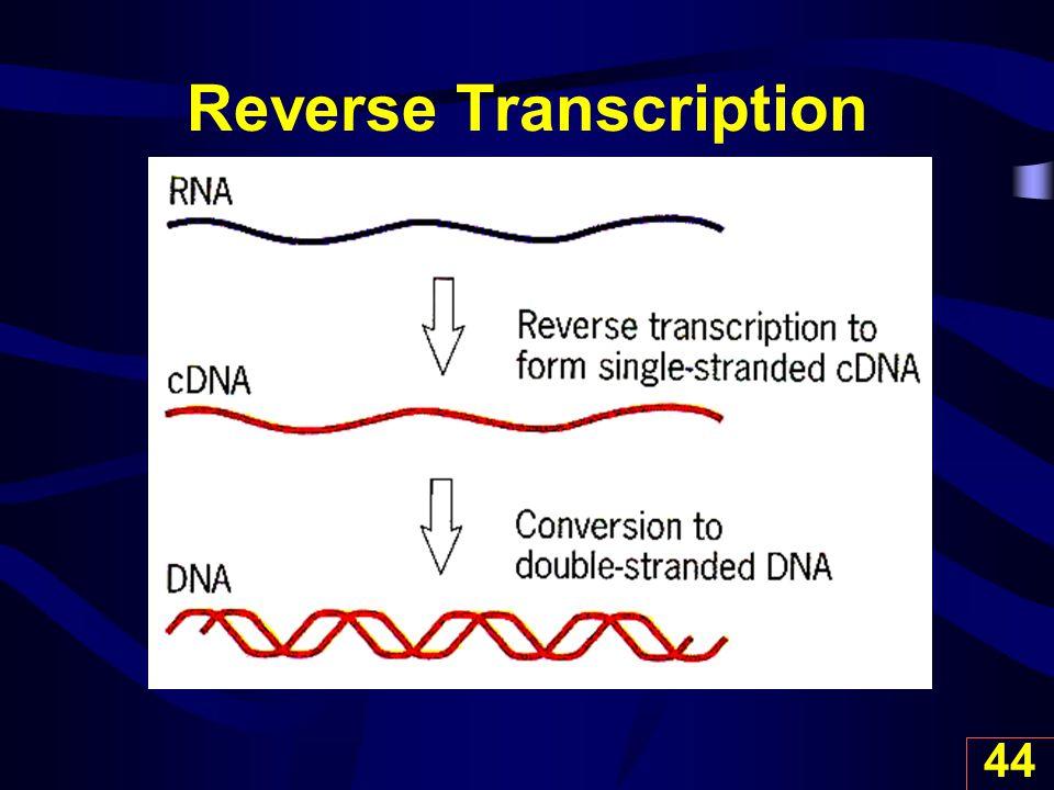 44 Reverse Transcription