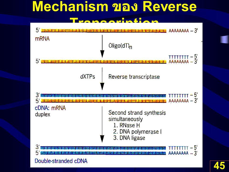 45 Mechanism ของ Reverse Transcription