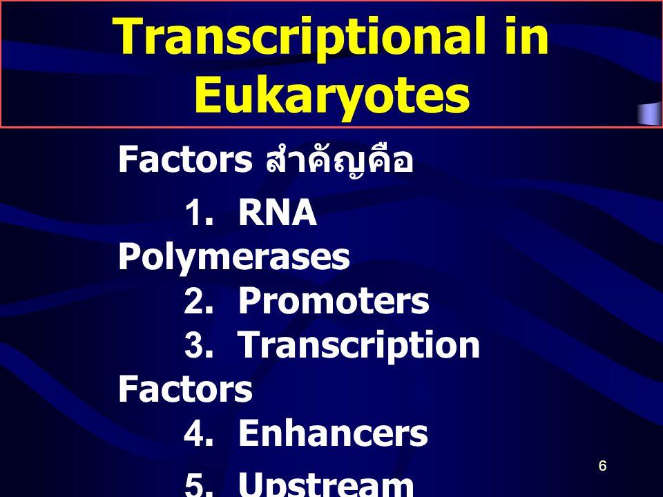 6 Transcriptional in Eukaryotes Factors สำคัญคือ 1. RNA Polymerases 2. Promoters 3. Transcription Factors 4. Enhancers 5. Upstream promoter elements