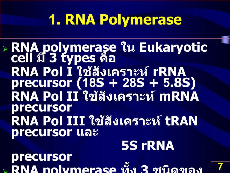 7 1. RNA Polymerase  RNA polymerase ใน Eukaryotic cell มี 3 types คือ RNA Pol I ใช้สังเคราะห์ rRNA precursor (18S + 28S + 5.8S) RNA Pol II ใช้สังเครา