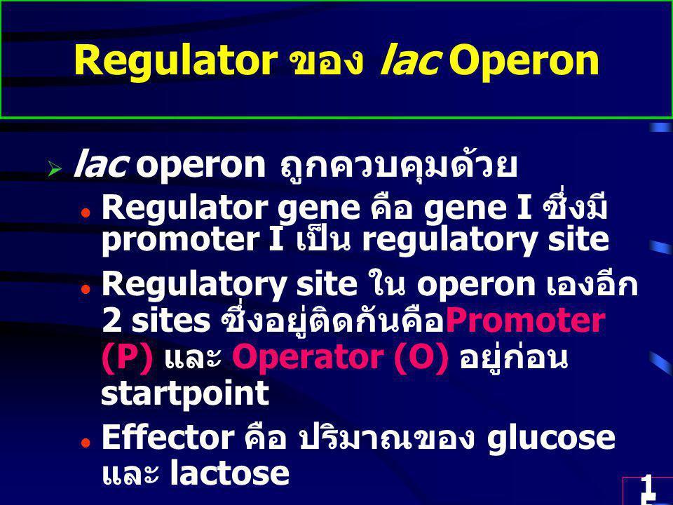 15 Regulator ของ lac Operon  lac operon ถูกควบคุมด้วย Regulator gene คือ gene I ซึ่งมี promoter I เป็น regulatory site Regulatory site ใน operon เองอีก 2 sites ซึ่งอยู่ติดกันคือ Promoter (P) และ Operator (O) อยู่ก่อน startpoint Effector คือ ปริมาณของ glucose และ lactose