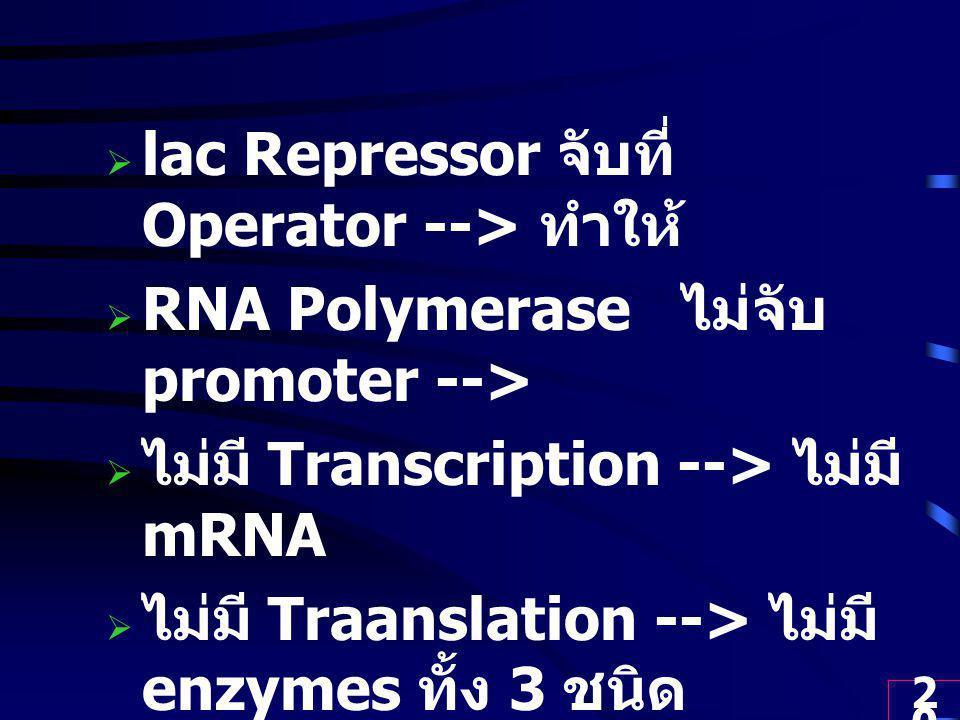 20  lac Repressor จับที่ Operator --> ทำให้  RNA Polymerase ไม่จับ promoter -->  ไม่มี Transcription --> ไม่มี mRNA  ไม่มี Traanslation --> ไม่มี enzymes ทั้ง 3 ชนิด  ไม่มีการใช้ lactose