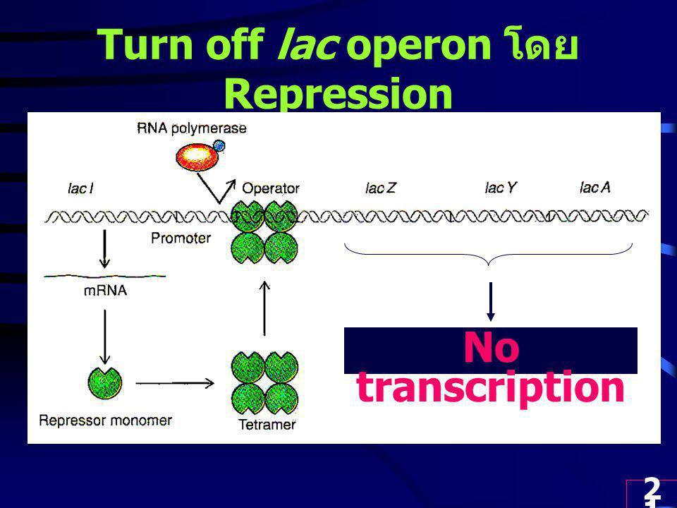 21 Turn off lac operon โดย Repression No transcription
