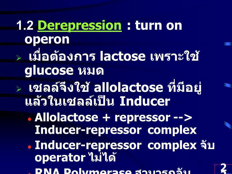 22 1.2 Derepression : turn on operon  เมื่อต้องการ lactose เพราะใช้ glucose หมด  เซลล์จึงใช้ allolactose ที่มีอยู่ แล้วในเซลล์เป็น Inducer Allolactose + repressor --> Inducer-repressor complex Inducer-repressor complex จับ operator ไม่ได้ RNA Polymerase สามารถจับ promoter ได้ และ Transcription lacZ, lacY และ lacA ให้ mRNA --> Translation --> enzymes 3 ชนิด นำ lactose เข้าเซลล์ และย่อย สลายให้พลังงานได้