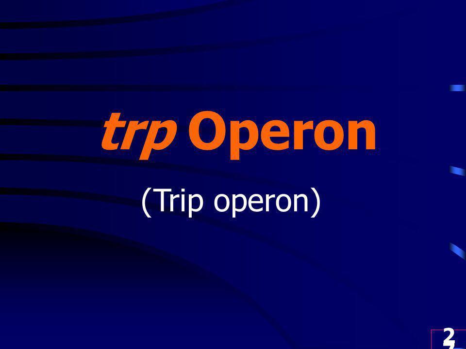 27 trp Operon (Trip operon)