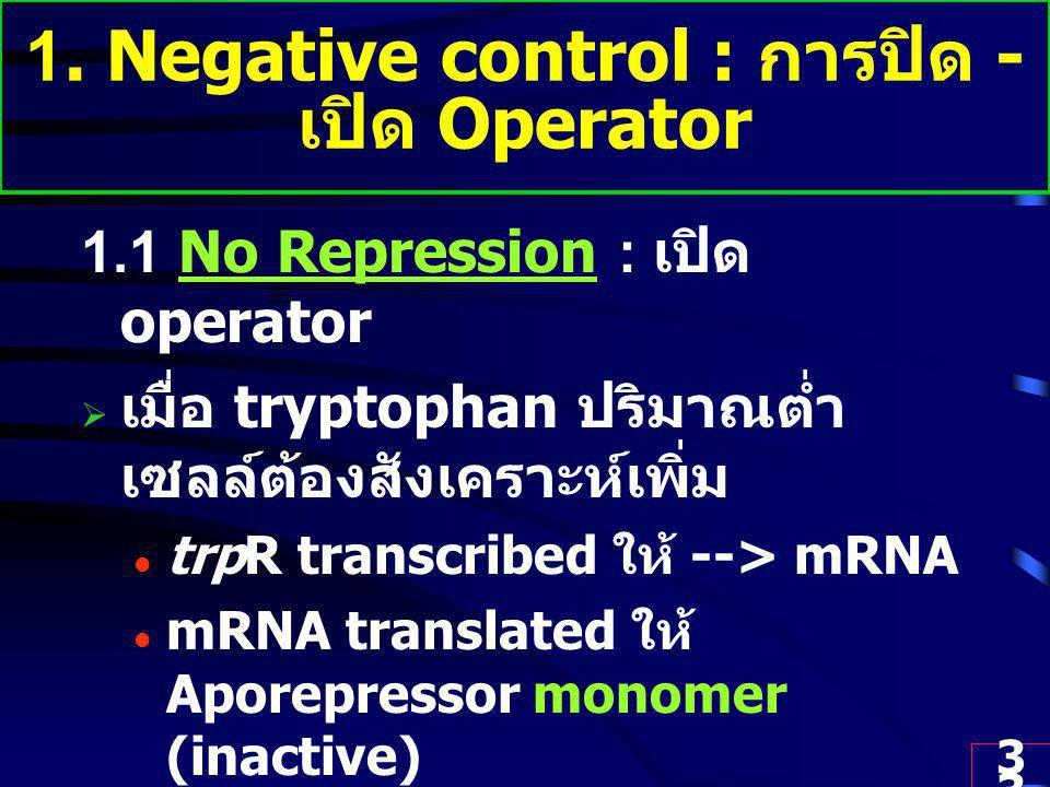 33 1. Negative control : การปิด - เปิด Operator 1.1 No Repression : เปิด operator  เมื่อ tryptophan ปริมาณต่ำ เซลล์ต้องสังเคราะห์เพิ่ม trpR transcrib