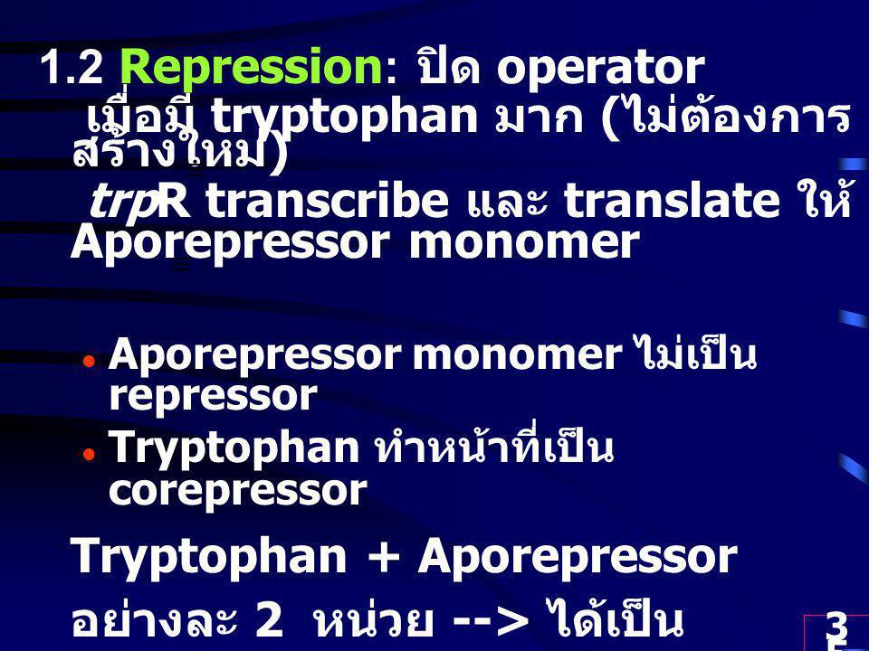 35 1.2 Repression: ปิด operator เมื่อมี tryptophan มาก ( ไม่ต้องการ สร้างใหม่ ) trpR transcribe และ translate ให้ Aporepressor monomer Aporepressor monomer ไม่เป็น repressor Tryptophan ทำหน้าที่เป็น corepressor Tryptophan + Aporepressor อย่างละ 2 หน่วย --> ได้เป็น Aporepressor-tryptophan dimer ทำหน้าที่เป็น Repressor Repressor + Operator --> RNA Pol ทำงานไม่ได้ --> no transcription ---> no enzymes