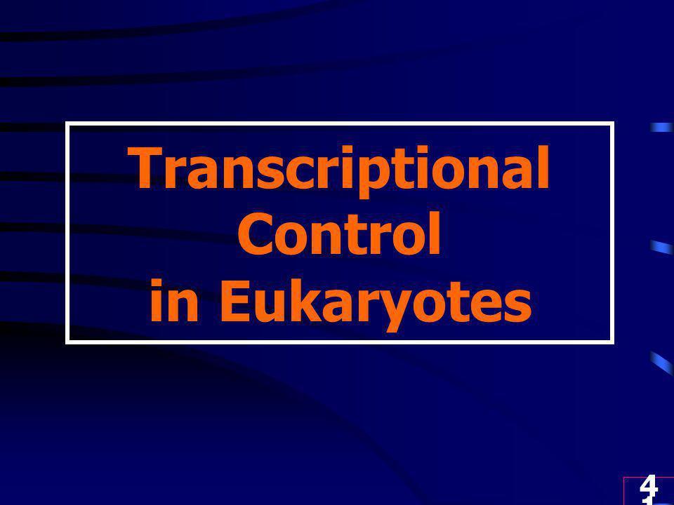 41 Transcriptional Control in Eukaryotes