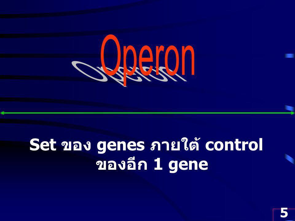 5 Set ของ genes ภายใต้ control ของอีก 1 gene