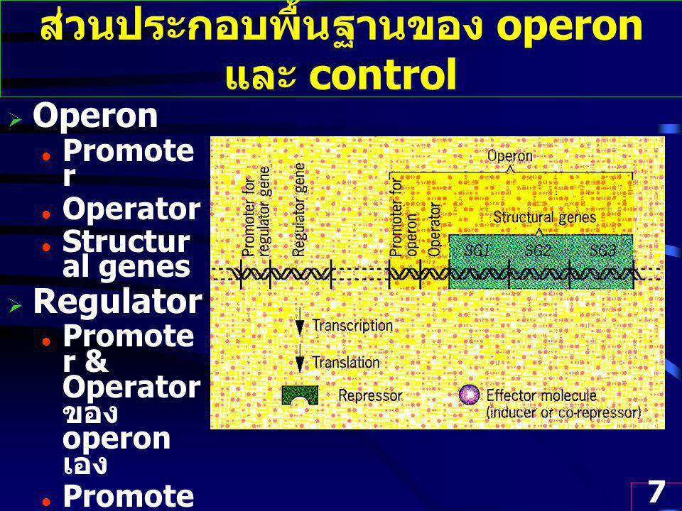 7 ส่วนประกอบพื้นฐานของ operon และ control  Operon Promote r Operator Structur al genes  Regulator Promote r & Operator ของ operon เอง Promote r ของ Regulato r gene Effector (metabol ite)