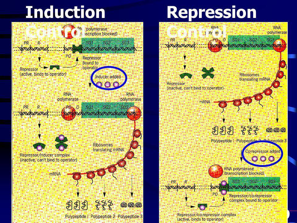 9 Induction Control Repression Control