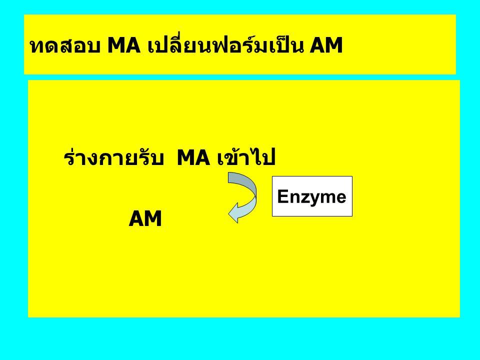 ทดสอบ MA เปลี่ยนฟอร์มเป็น AM ร่างกายรับ MA เข้าไป AM Enzyme