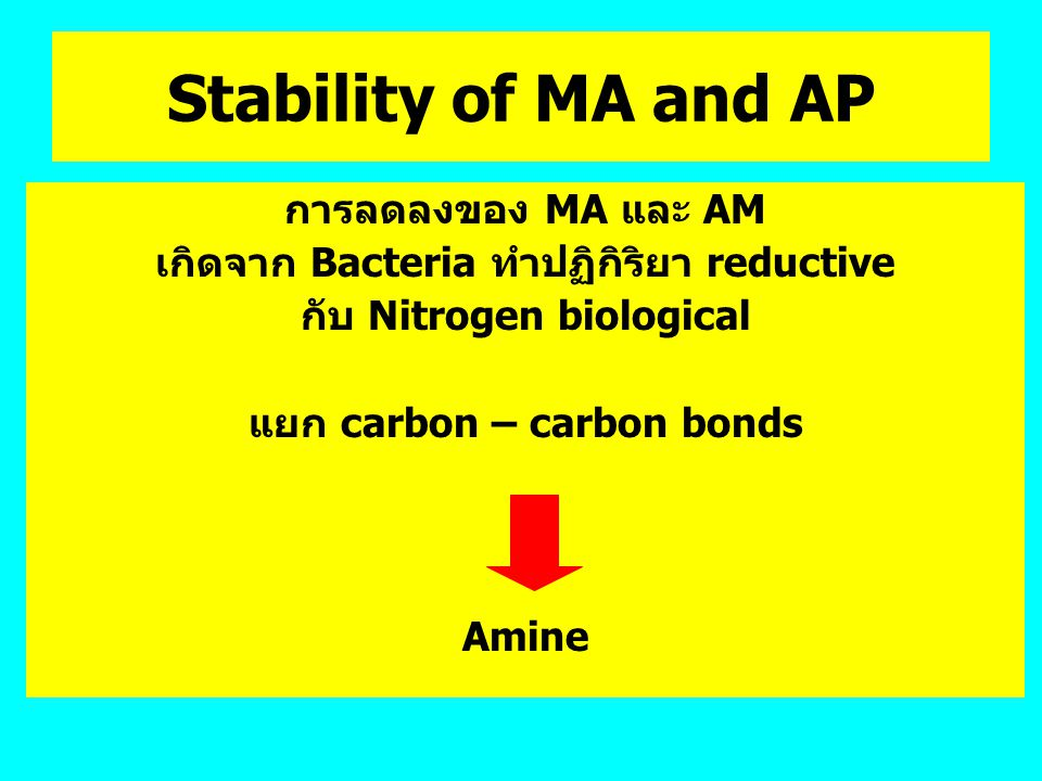 Stability of MA and AP การลดลงของ MA และ AM เกิดจาก Bacteria ทำปฏิกิริยา reductive กับ Nitrogen biological แยก carbon – carbon bonds Amine