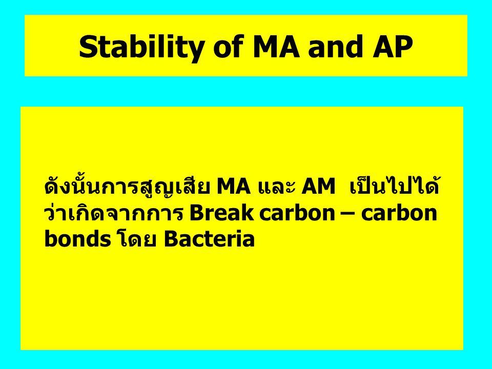 Stability of MA and AP ดังนั้นการสูญเสีย MA และ AM เป็นไปได้ ว่าเกิดจากการ Break carbon – carbon bonds โดย Bacteria