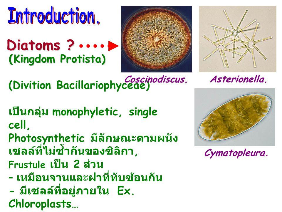 (Kingdom Protista) (Divition Bacillariophyceae) เป็นกลุ่ม monophyletic, single cell, Photosynthetic มีลักษณะตามผนัง เซลล์ที่ไม่ซ้ำกันของซิลิกา, Frustule เป็น 2 ส่วน - เหมือนจานและฝาที่ทับซ้อนกัน - มีเซลล์ที่อยู่ภายใน Ex.