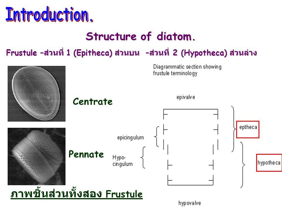 ( รูปที่ 2B ) บ่มด้วย Hydrogen peroxide นาน 6 ชั่วโมง วัตถุและสิ่งแปลกปลอมจะเปลี่ยนไม่มี จึงทำให้สามารถ เห็นขอบเขตขอ Diatom ชัดเจนขึ้น