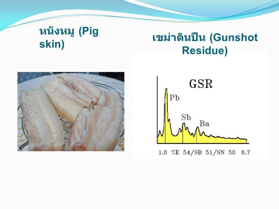 หนังหมู (Pig skin) เขม่าดินปืน (Gunshot Residue)