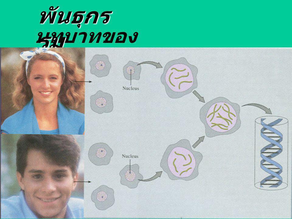 บทบาทของ genes พันธุกร รม