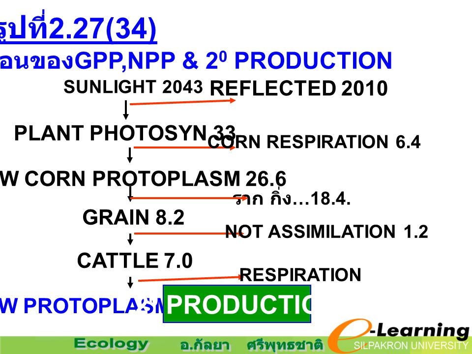 รูปที่ 2.27(34) ขั้นตอนของ GPP,NPP & 2 0 PRODUCTION SUNLIGHT 2043 PLANT PHOTOSYN 33 NEW CORN PROTOPLASM 26.6 REFLECTED 2010 CORN RESPIRATION 6.4 ราก กิ่ง …18.4.