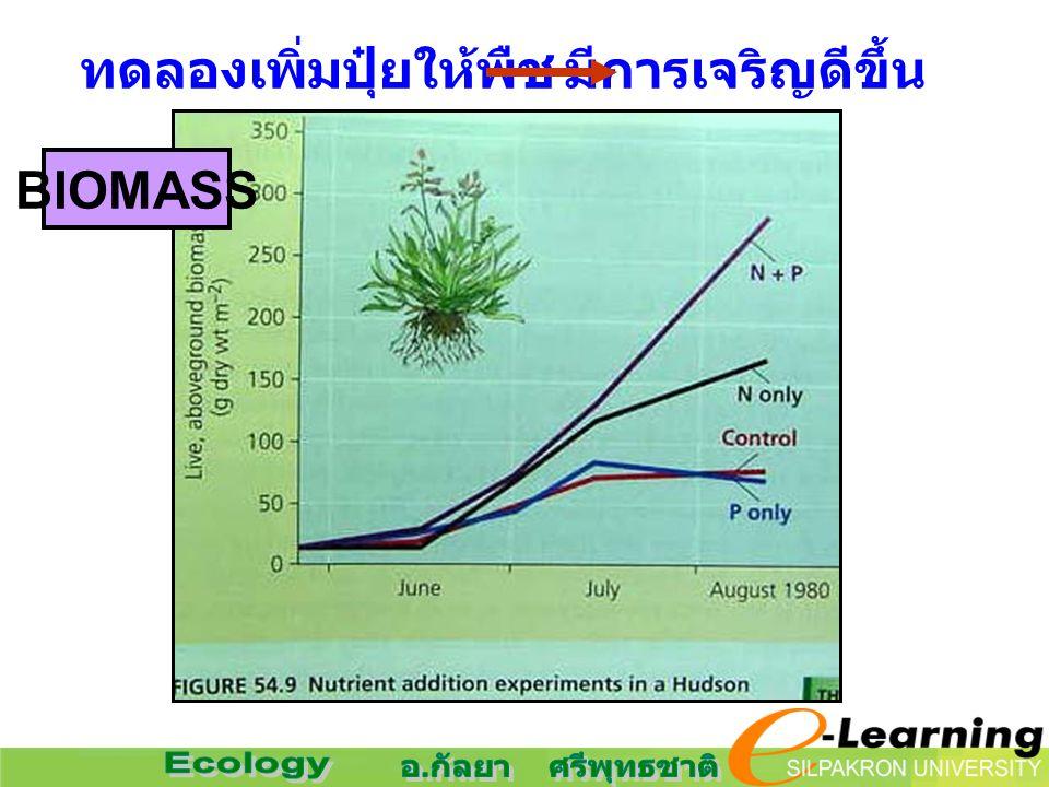 ทดลองเพิ่มปุ๋ยให้พืชมีการเจริญดีขึ้น BIOMASS