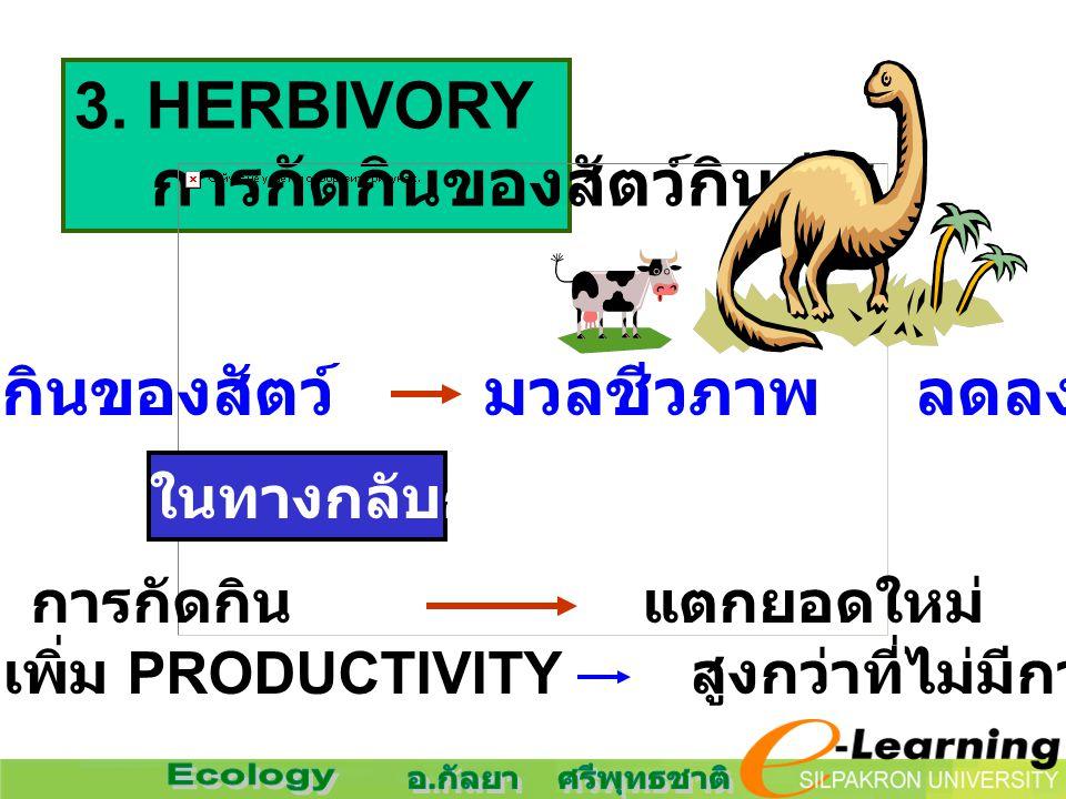 3. HERBIVORY การกัดกินของสัตว์กินพืช การกัดกินของสัตว์ มวลชีวภาพ ลดลง แต่ในทางกลับกัน การกัดกิน แตกยอดใหม่ เพิ่ม PRODUCTIVITY สูงกว่าที่ไม่มีการกัดกิน
