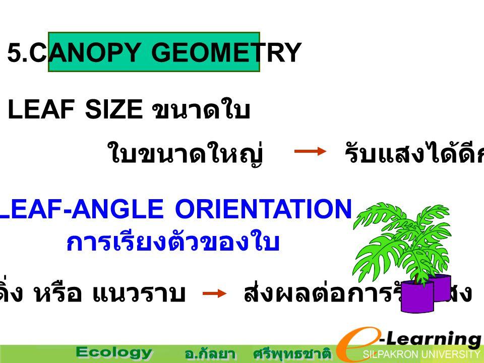 5.CANOPY GEOMETRY LEAF SIZE ขนาดใบ LEAF-ANGLE ORIENTATION การเรียงตัวของใบ ใบขนาดใหญ่ รับแสงได้ดีกว่า แนวดิ่ง หรือ แนวราบ ส่งผลต่อการรับแสง
