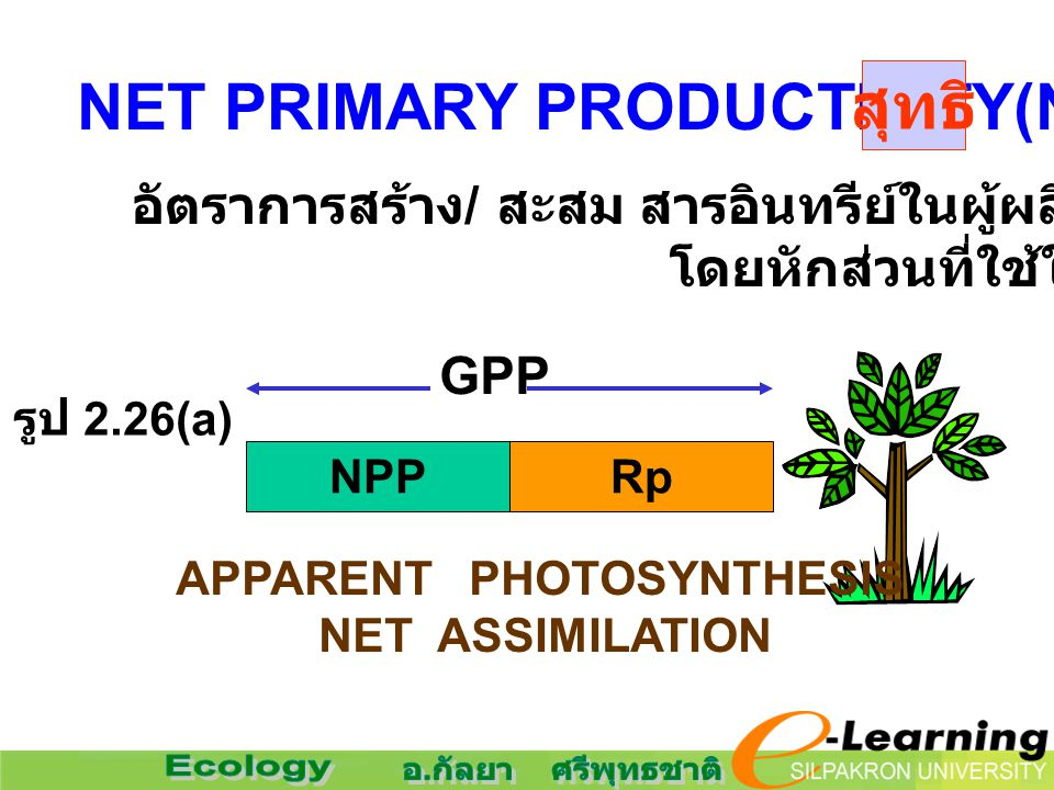 NET PRIMARY PRODUCTIVITY(NPP) อัตราการสร้าง / สะสม สารอินทรีย์ในผู้ผลิต โดยหักส่วนที่ใช้ในการหายใจ NPPRp GPP APPARENT PHOTOSYNTHESIS NET ASSIMILATION