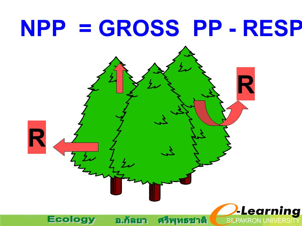 NPP = GROSS PP - RESPIRATION R R