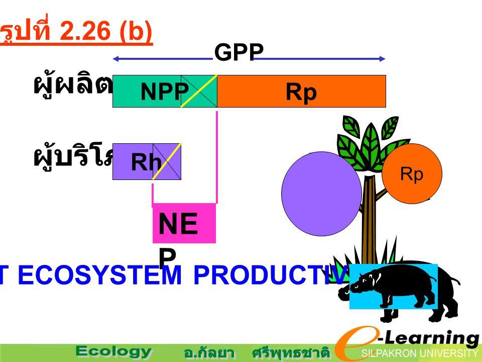 GPP ผู้ผลิต ผู้บริโภค NPPRp Rh Rp NE P NET ECOSYSTEM PRODUCTIVITY รูปที่ 2.26 (b)