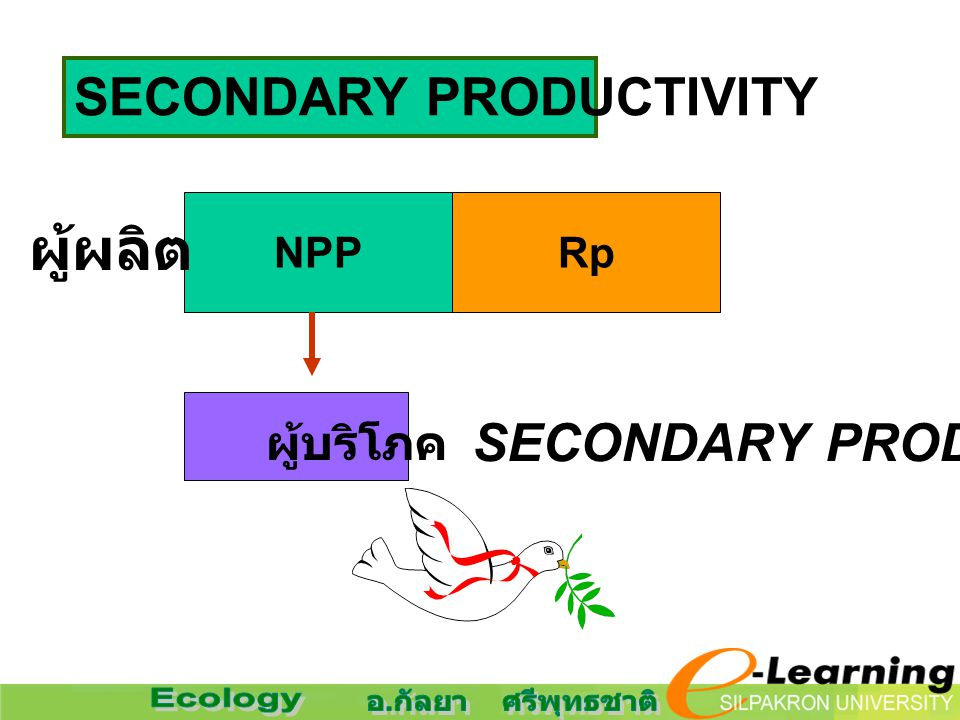 สังคมที่สมดุล อัตราการสร้าง = การใช้ รูปที่ 2.26 (c) NPPRp GPP ผู้บริโภค ผู้ผลิต Rh สร้าง กิน ใช้ … หมด ไม่เหลือในการเจริญ