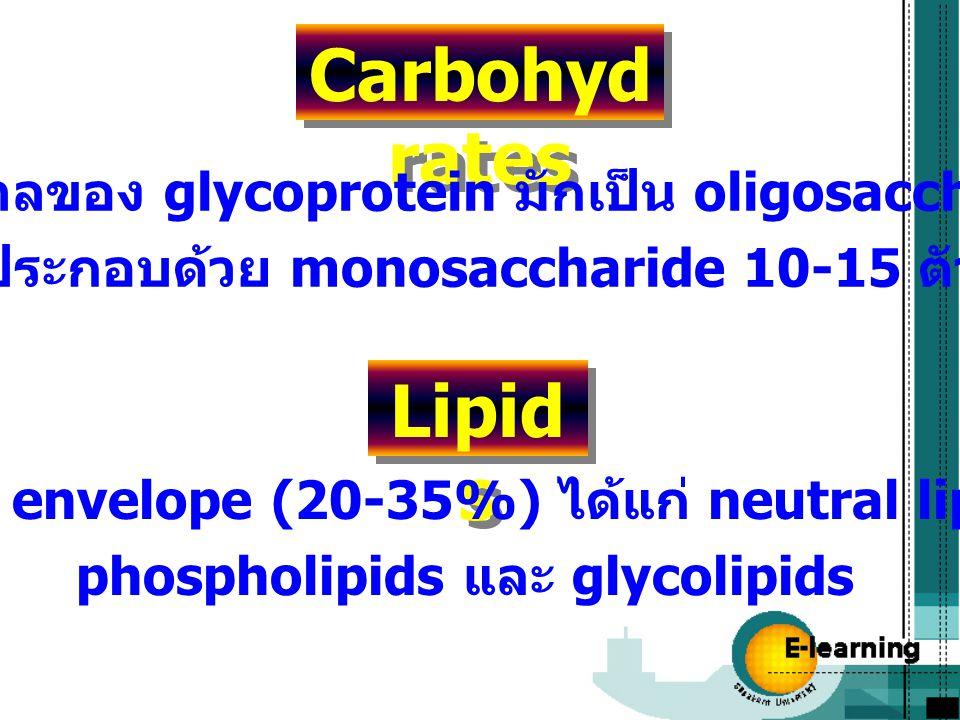 Carbohyd rates ส่วนน้ำตาลของ glycoprotein มักเป็น oligosaccharides ที่ประกอบด้วย monosaccharide 10-15 ตัว Lipid s พบใน envelope (20-35%) ได้แก่ neutra