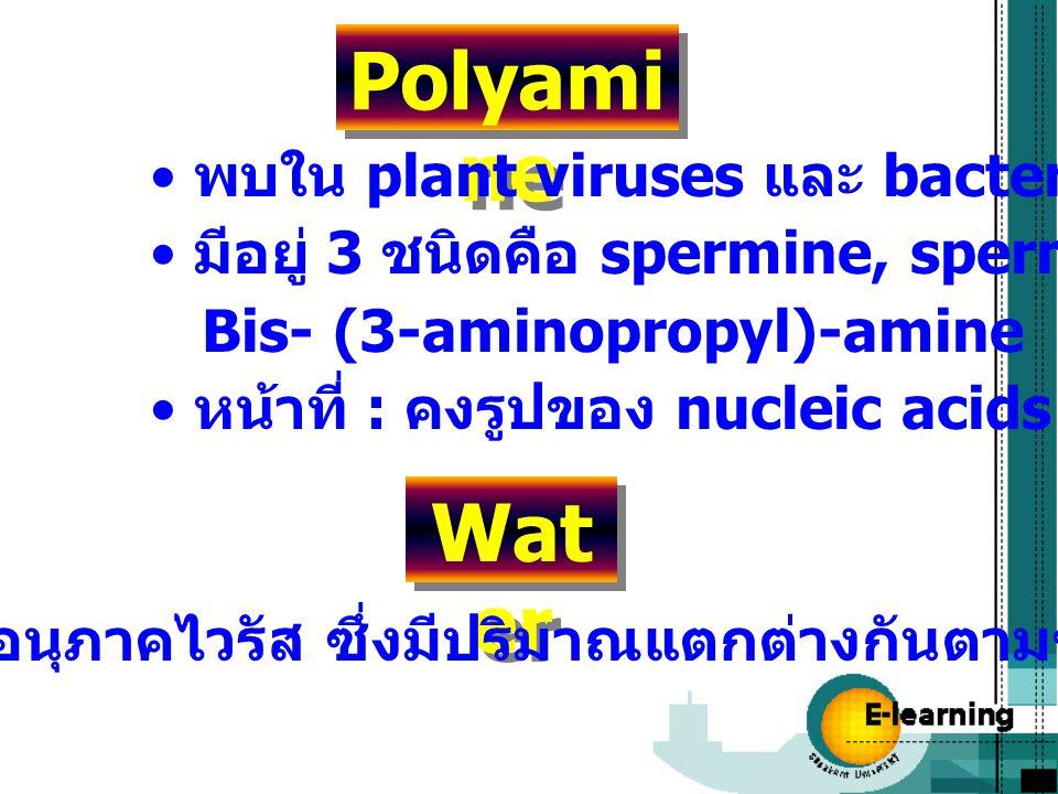 Polyami ne พบใน plant viruses และ bacteriophage มีอยู่ 3 ชนิดคือ spermine, spermidine และ Bis- (3-aminopropyl)-amine หน้าที่ : คงรูปของ nucleic acids