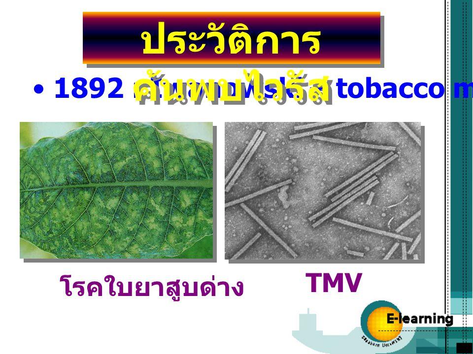 1892 : Iwanowski – tobacco mosaic virus (TMV) ประวัติการ ค้นพบไวรัส โรคใบยาสูบด่าง TMV