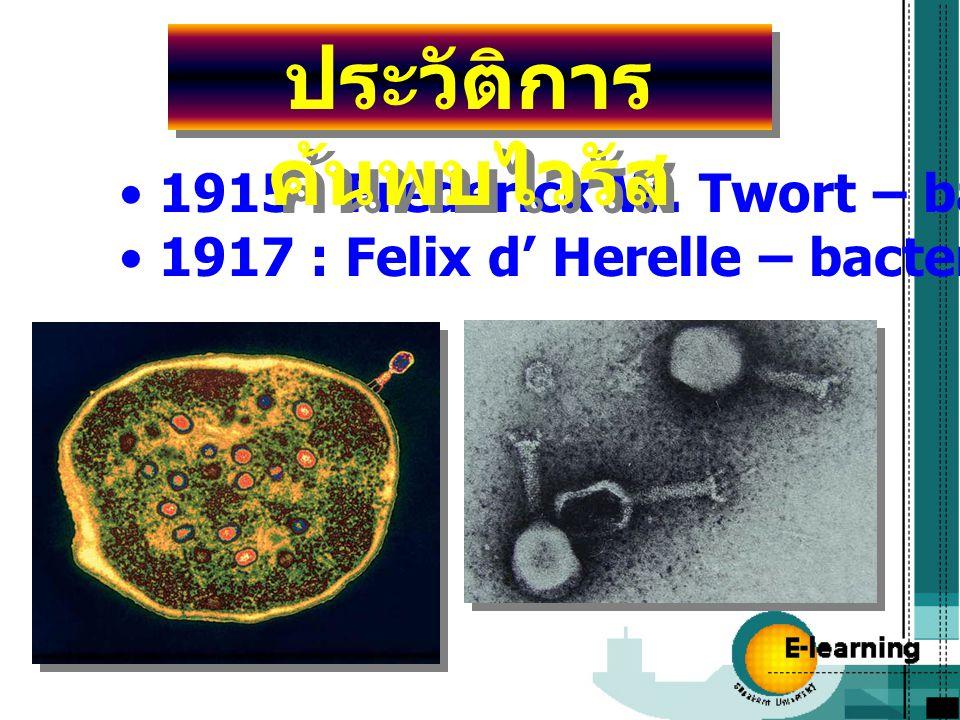 1915 : Frederick W. Twort – bacterial virus 1917 : Felix d' Herelle – bacteriophage/ phage ประวัติการ ค้นพบไวรัส