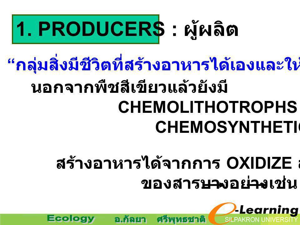 "1. PRODUCERS : ผู้ผลิต "" กลุ่มสิ่งมีชีวิตที่สร้างอาหารได้เองและให้อาหารแก่สิ่งมีชีวิตอื่น ๆ "" นอกจากพืชสีเขียวแล้วยังมี CHEMOLITHOTROPHS หรือ CHEMOSYN"
