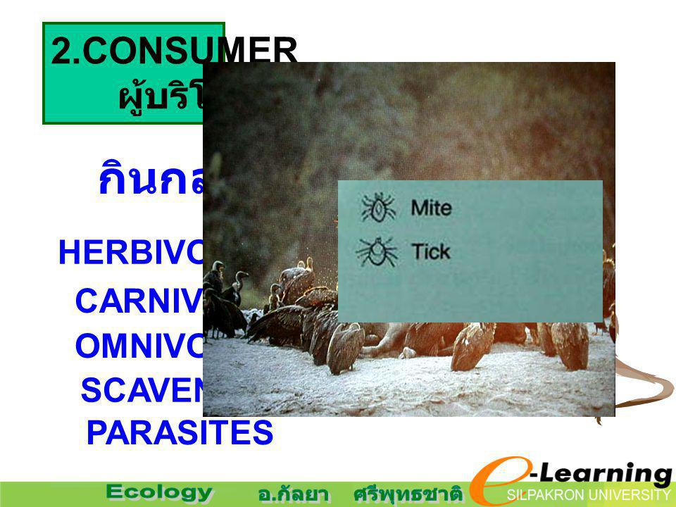 2.CONSUMER ผู้บริโภค กินกลุ่มผู้ผลิตเป็นอาหาร แบ่งย่อยได้ HERBIVORES.. กินพืช CARNIVORES.. กินสัตว์ OMNIVORES SCAVENGERS PARASITES