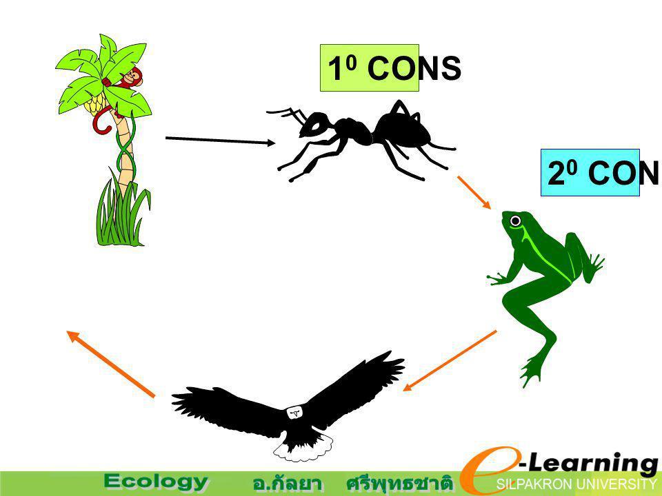 1 0 CONS 2 0 CONS