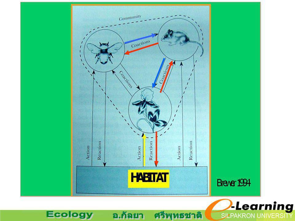 COMPONENTS OF ECOSYSTEM : องค์ประกอบของระบบนิเวศ 1) ABIOTIC COMPONENTS LITHOSPHERE : ของแข็ง HYDROSPHERE : น้ำ ATMOSPHERE : บรรยากาศ