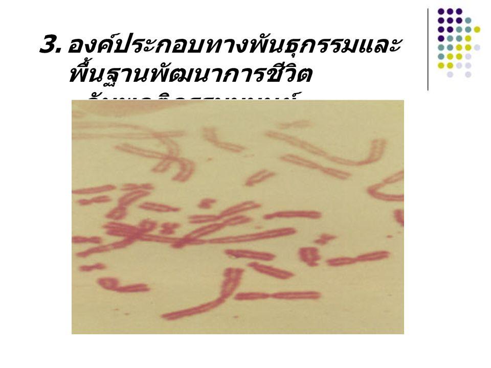 3. องค์ประกอบทางพันธุกรรมและ พื้นฐานพัฒนาการชีวิต กับพฤติกรรมมนุษย์