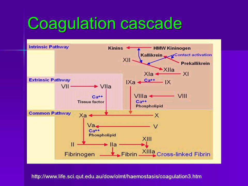 Coagulation cascade http://www.life.sci.qut.edu.au/dow/olmt/haemostasis/coagulation3.htm