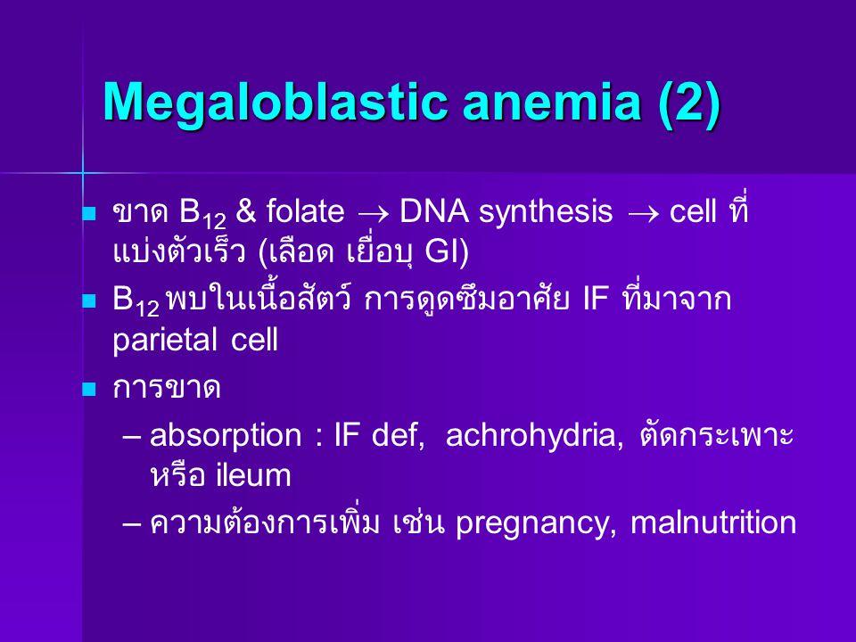Megaloblastic anemia (2) ขาด B 12 & folate  DNA synthesis  cell ที่ แบ่งตัวเร็ว ( เลือด เยื่อบุ GI) B 12 พบในเนื้อสัตว์ การดูดซึมอาศัย IF ที่มาจาก p