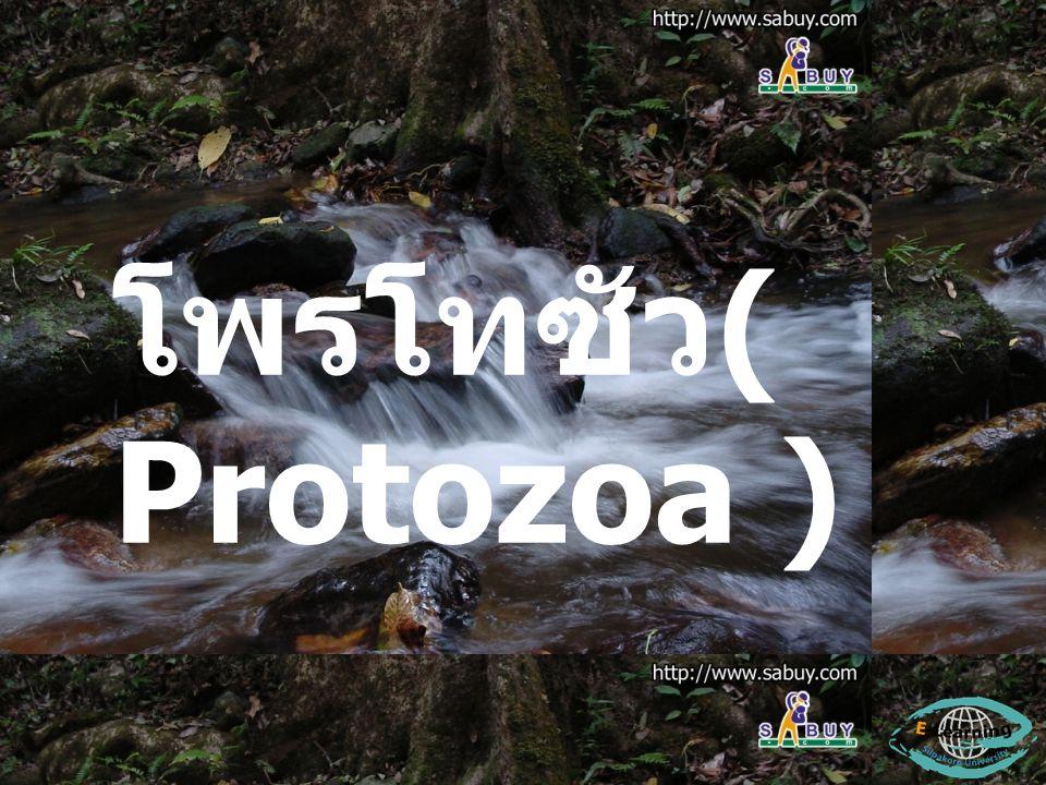 โพรโทซัว ( Protozoa )