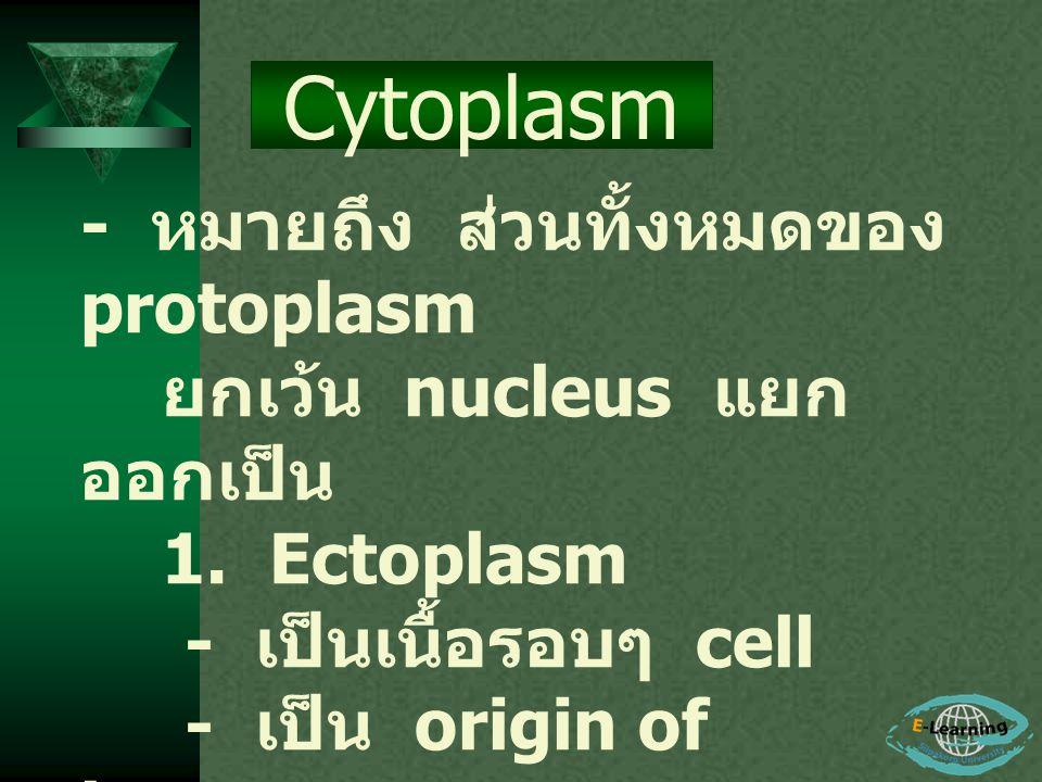 - หมายถึง ส่วนทั้งหมดของ protoplasm ยกเว้น nucleus แยก ออกเป็น 1. Ectoplasm - เป็นเนื้อรอบๆ cell - เป็น origin of locomotor organ - ช่วยเกี่ยวกับ meta