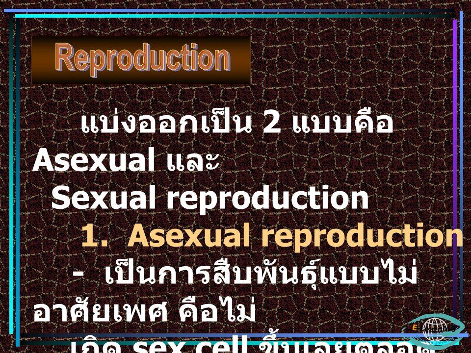 แบ่งออกเป็น 2 แบบคือ Asexual และ Sexual reproduction 1. Asexual reproduction - เป็นการสืบพันธุ์แบบไม่ อาศัยเพศ คือไม่ เกิด sex cell ขึ้นเลยตลอด ช่วงเว