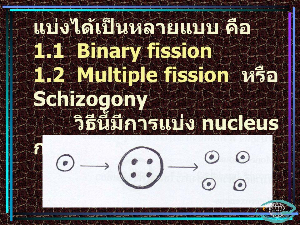 แบ่งได้เป็นหลายแบบ คือ 1.1 Binary fission 1.2 Multiple fission หรือ Schizogony วิธีนี้มีการแบ่ง nucleus ก่อนแล้วจึง แบ่ง cytoplasm