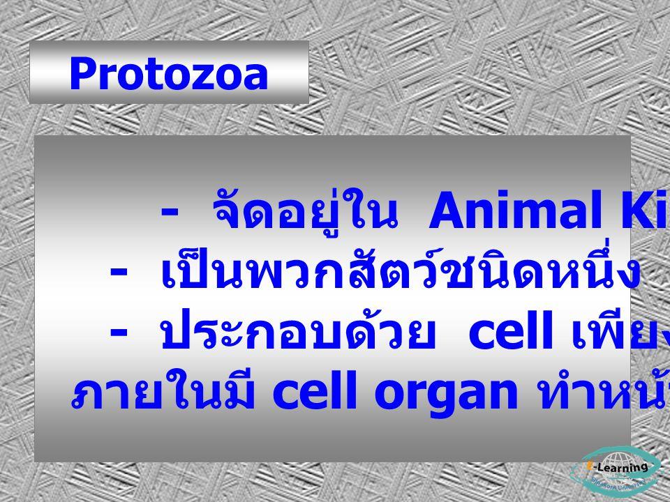 Protozoa - จัดอยู่ใน Animal Kingdom - เป็นพวกสัตว์ชนิดหนึ่ง - ประกอบด้วย cell เพียง cell เดียว ภายในมี cell organ ทำหน้าที่ต่างๆ