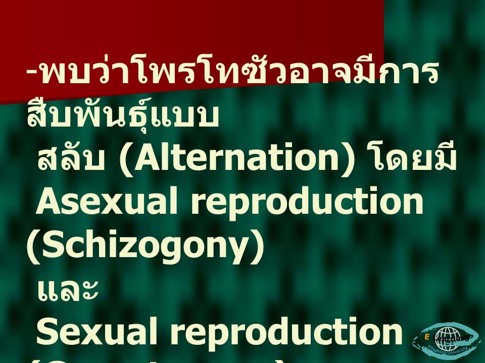 - พบว่าโพรโทซัวอาจมีการ สืบพันธุ์แบบ สลับ (Alternation) โดยมี Asexual reproduction (Schizogony) และ Sexual reproduction (Gametogony)