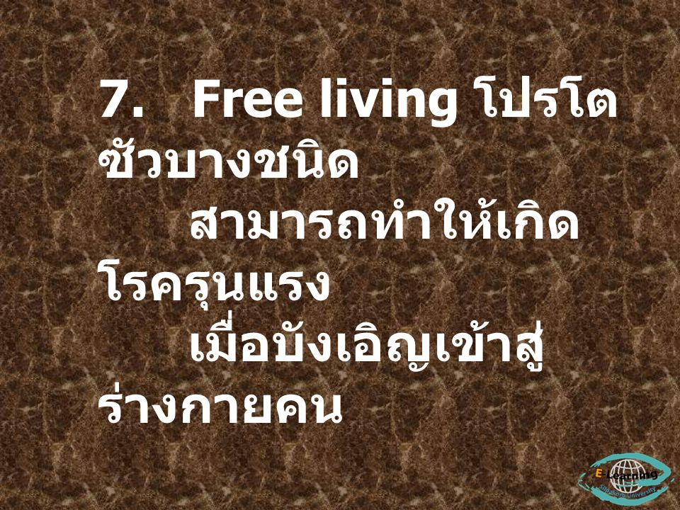 7. Free living โปรโต ซัวบางชนิด สามารถทำให้เกิด โรครุนแรง เมื่อบังเอิญเข้าสู่ ร่างกายคน