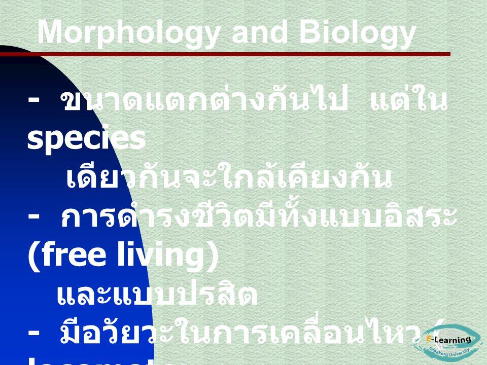 - ขนาดแตกต่างกันไป แต่ใน species เดียวกันจะใกล้เคียงกัน - การดำรงชีวิตมีทั้งแบบอิสระ (free living) และแบบปรสิต - มีอวัยวะในการเคลื่อนไหว ( locomotor o